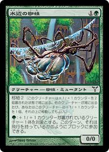 水辺の蜘蛛