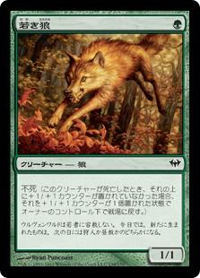 《若き狼/Young Wolf》[DKA] 緑C