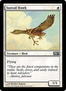 《陽光尾の鷹/Suntail Hawk》[M14] 白C