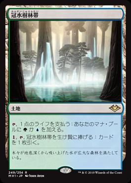 冠水樹林帯