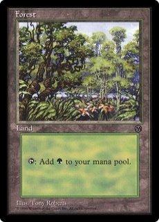 《森/Forest》[初代アリーナランド] 土地